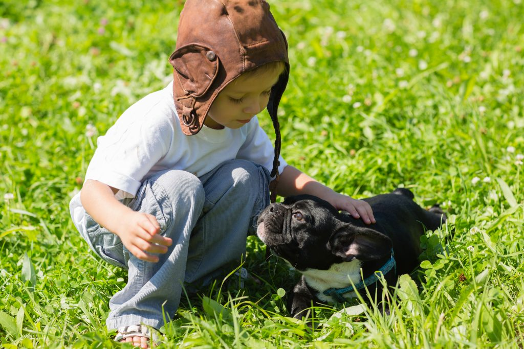 Blue French Bulldog playing with kids